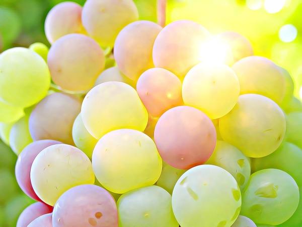 grape-2002848_1280