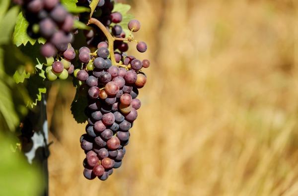 grapes-1612835_1280