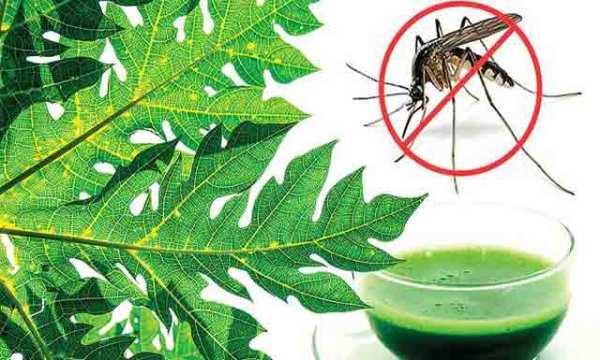 health-benefits-of-papaya-leaves